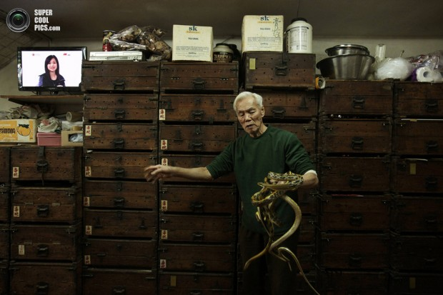Snake shop owner Mak Tai-kong, 84, holds snakes which were caught in mainland China, in front of wooden cabinets containing snakes, at his snake soup store in Hong Kong