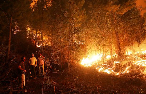 пожар в Чили_2