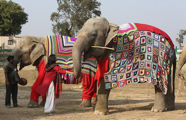 слоны_3