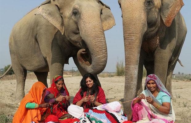 слоны_4