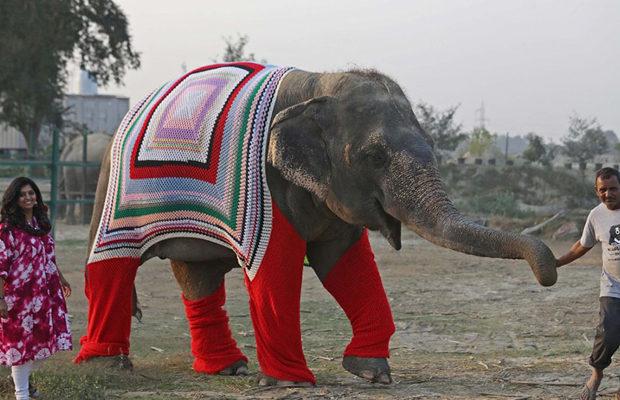 слоны_5