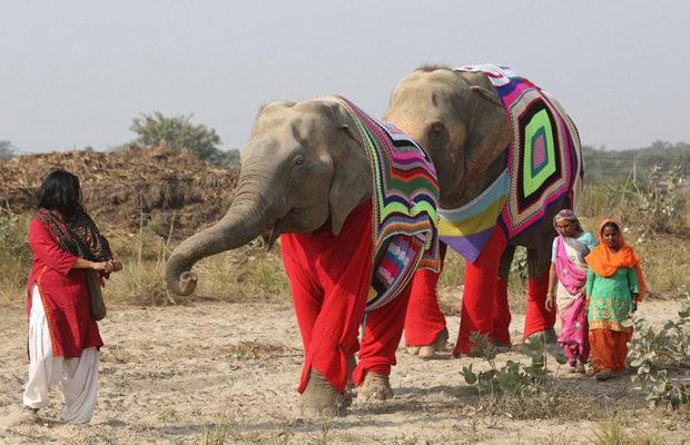 слоны_7