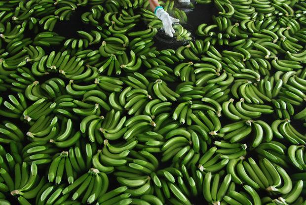 бананы_12