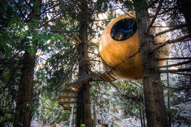 на дереве_11