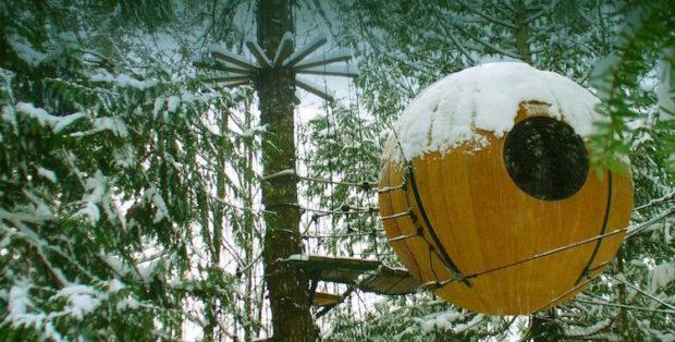 на дереве_8