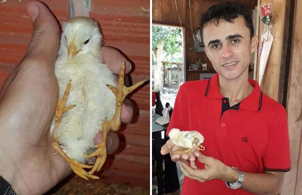 цыплёнок_4