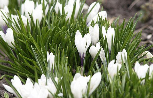 весна_1