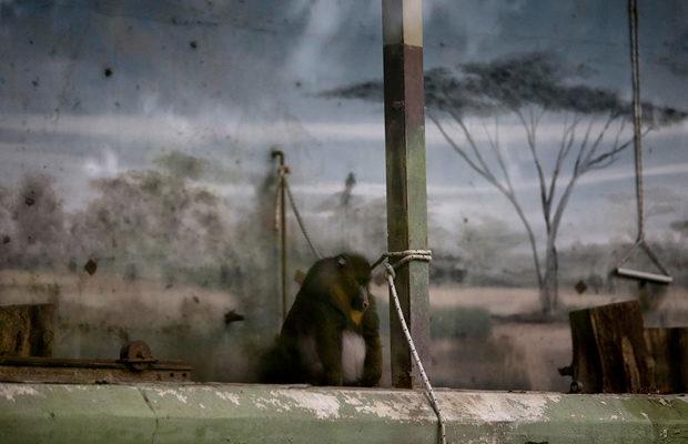 зоопарк_12