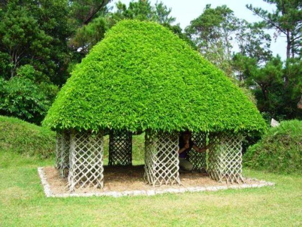домик из деревьев