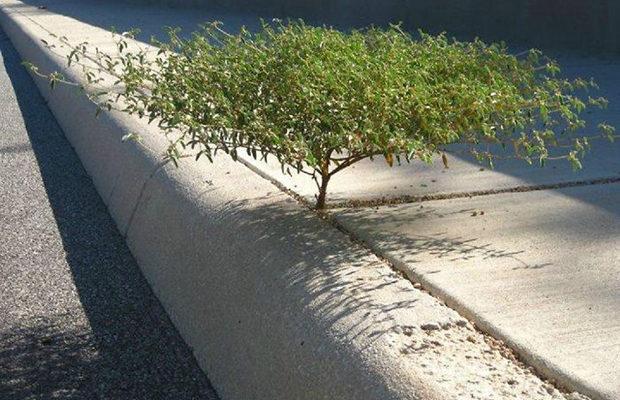 деревья_5