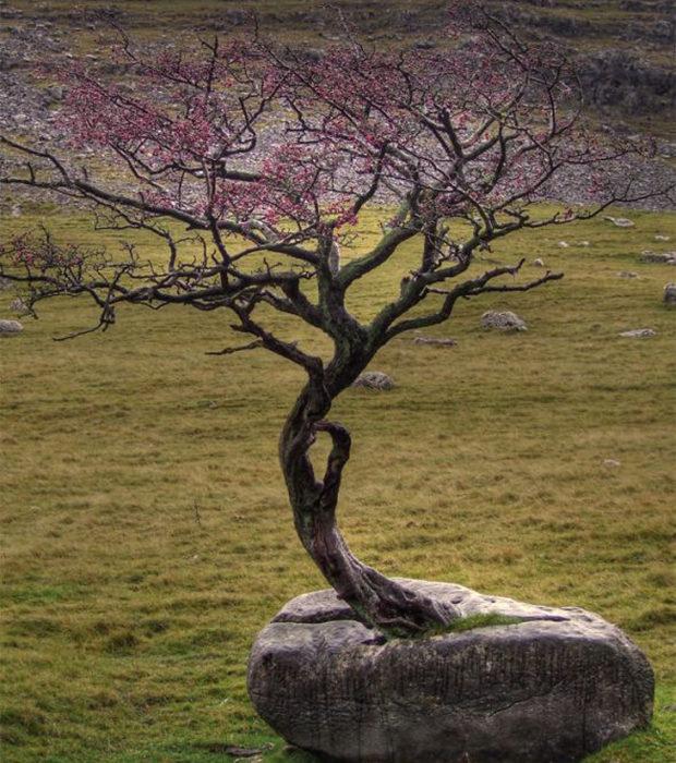 деревья_7
