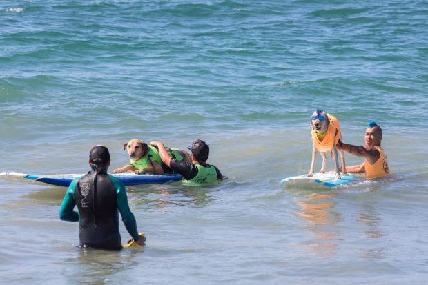 соревнования по сёрфингу_12