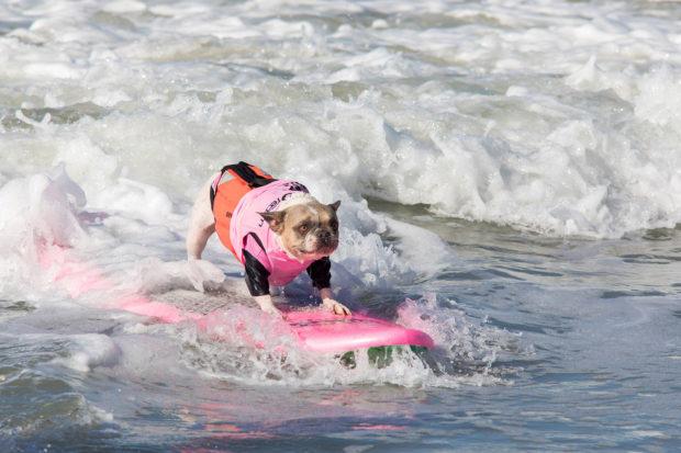 соревнования по сёрфингу_14