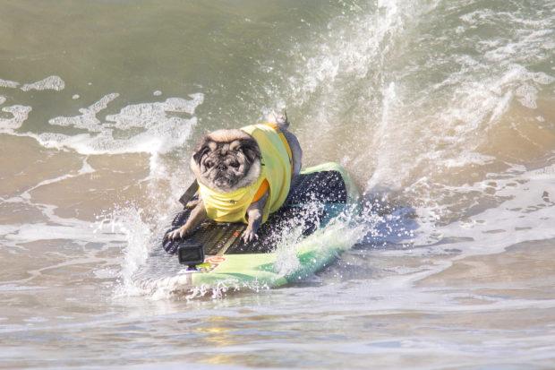 соревнования по сёрфингу_15