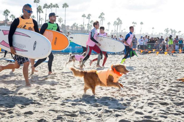 соревнования по сёрфингу_16