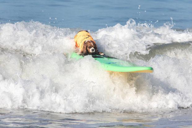 соревнования по сёрфингу_17