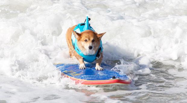 соревнования по сёрфингу_2