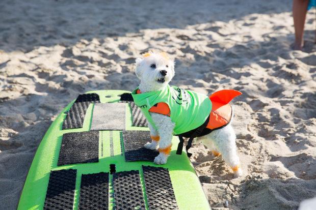 соревнования по сёрфингу_4