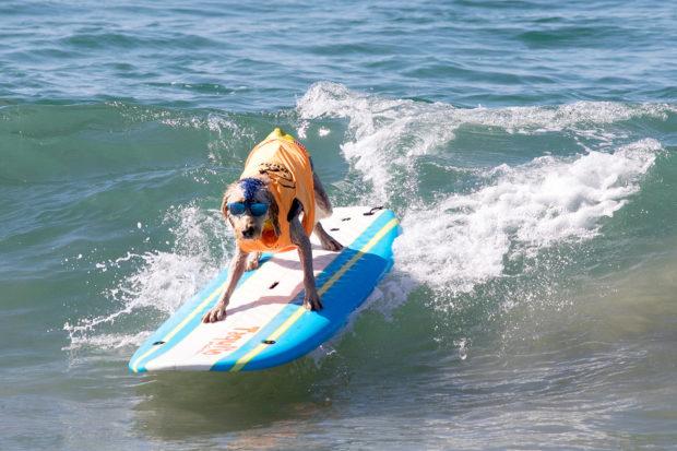 соревнования по сёрфингу_5