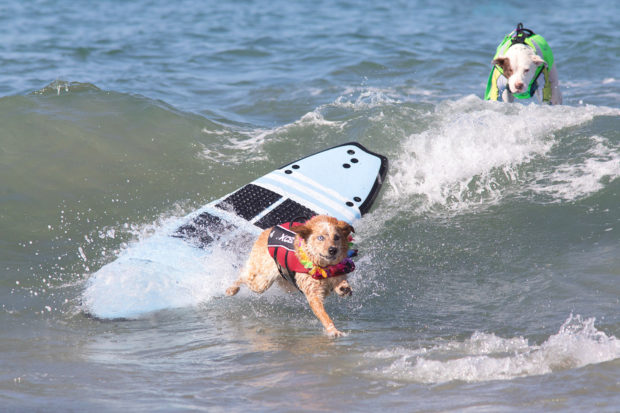 соревнования по сёрфингу_7