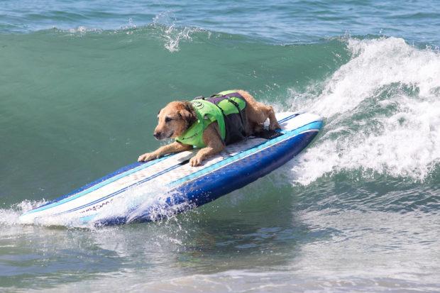 соревнования по сёрфингу_8