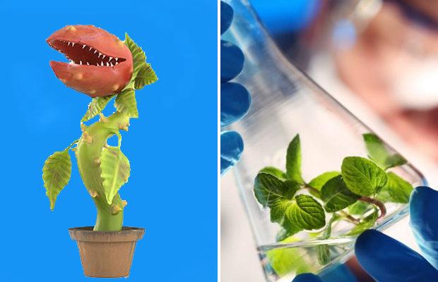растения_4