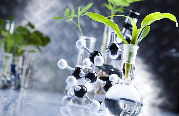 растения_5