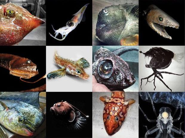 рыбки_10
