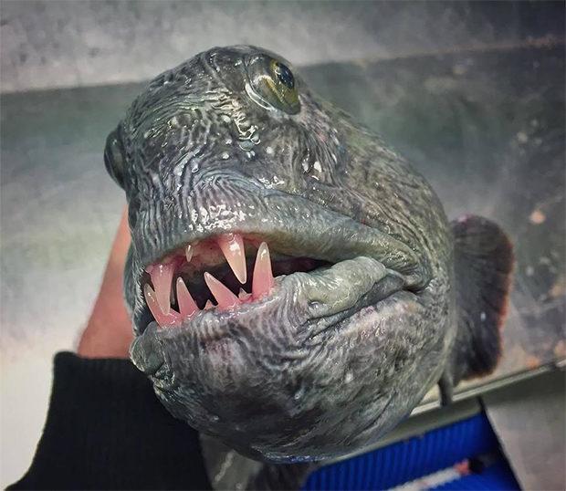 рыбки_14
