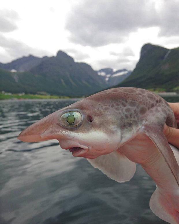 рыбки_2
