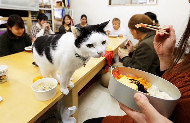 в Японии_11