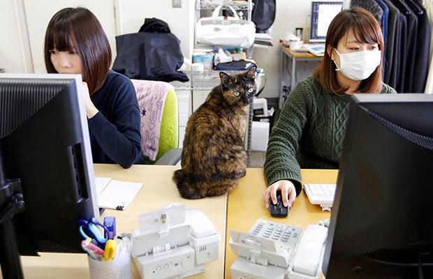 в Японии_2