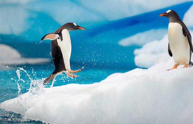 Антарктида_3
