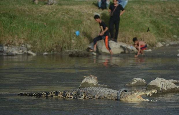 крокодил_2