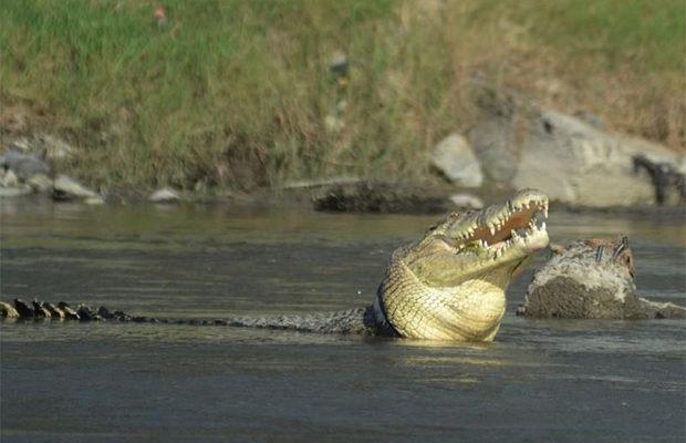 крокодил_3