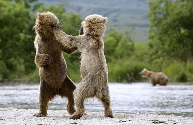 медвежата_3