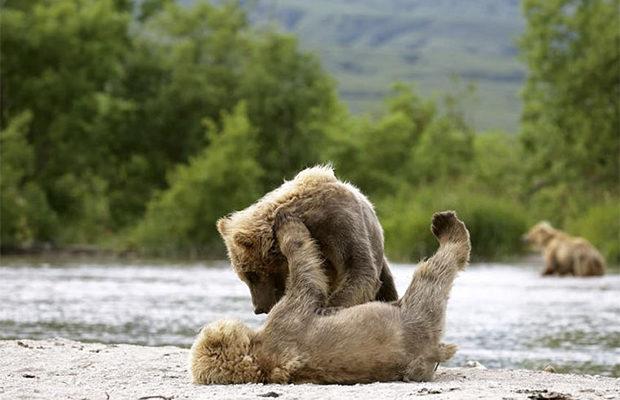 медвежата_4