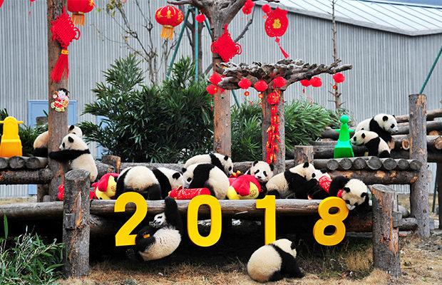 по китайскому календарю_2