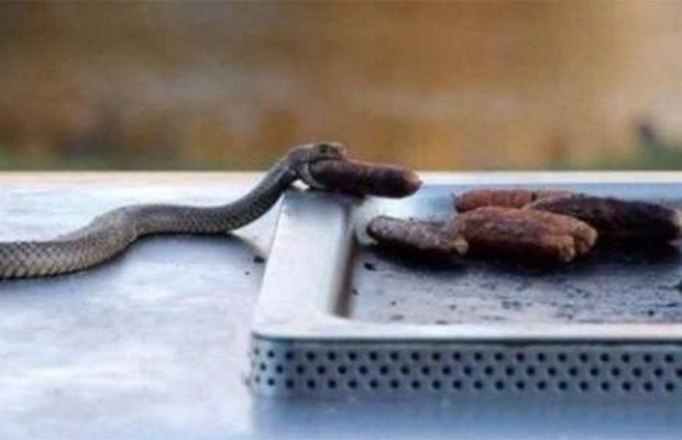 змеи_15