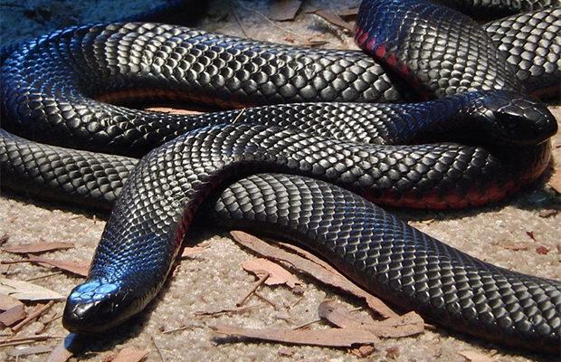 змеи_3