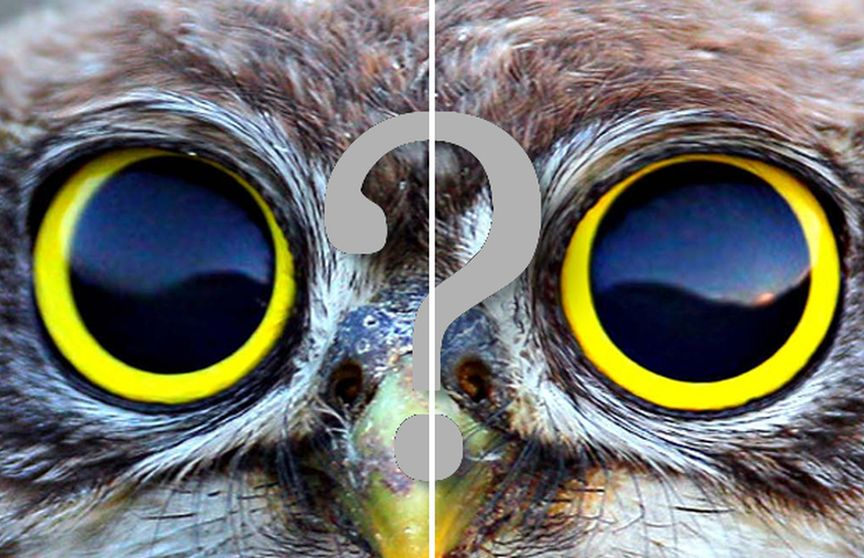 Вгадайте тварина тільки по очах