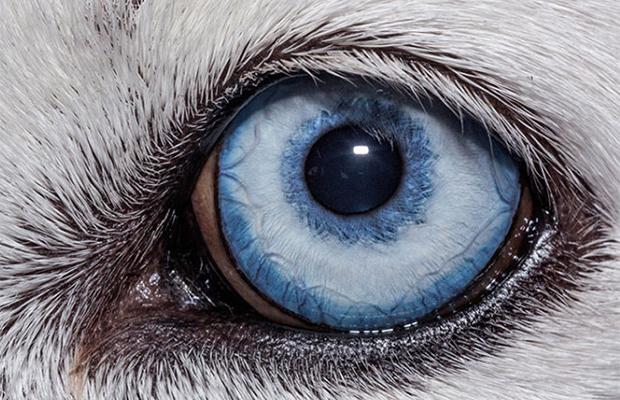 Угадайте животное только по глазам Природа,Разное,узнать по глазам
