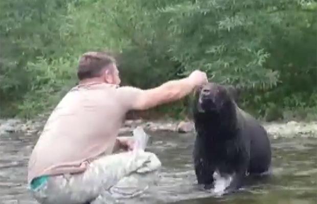 Как покормить с руки дикого медведя природа, разное, человек, медведи