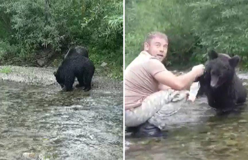 Як погодувати з руки дикого ведмедя