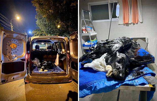 Дети нашли на пустыре чёрное нечто, которое оказалось собакой Природа,proyecto 4 patas,Аргентина