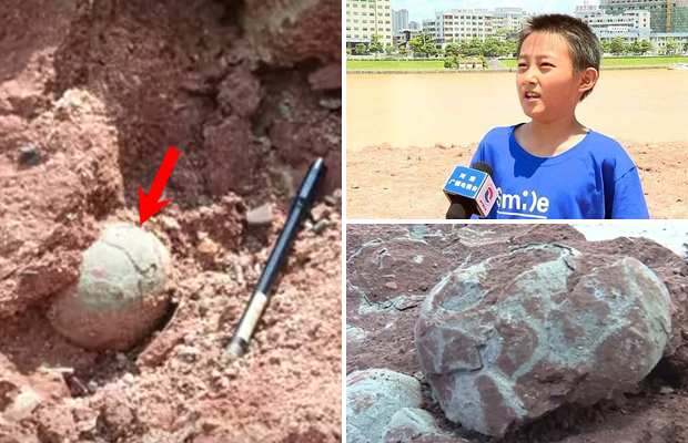 Десятилетний мальчик нашел доисторические яйца динозавра