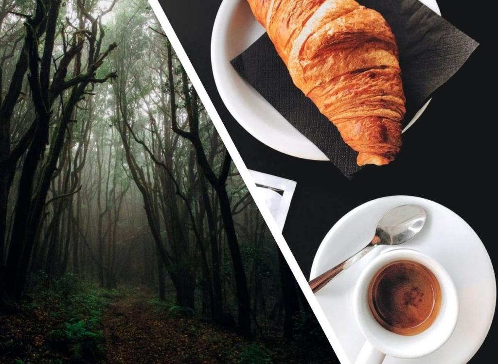 Женщина обнаружила на дереве существо без конечностей, но когда приехали зоозащитники они решили выпить с ним чай