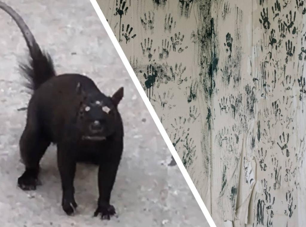 В TikTok появился ролик, на котором все видят «трёхглазое» существо, но не понимают кто это на самом деле