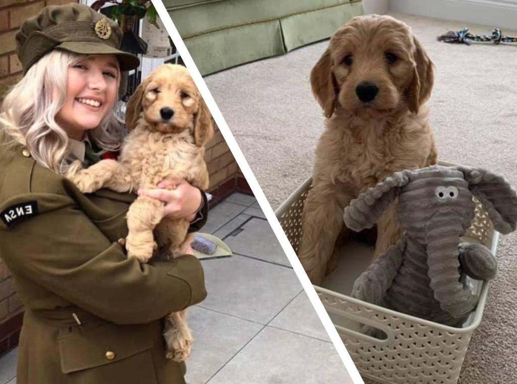 Девушка купила щенка о котором мечтала всю жизнь, но спустя 6 месяцев такого сюрприза никто не мог ожидать