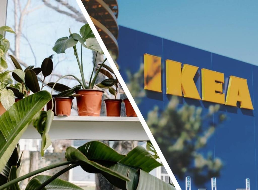 Женщина купила в Икеа растение, но дома нашла в горшке сюрприз в виде экзотического гостя